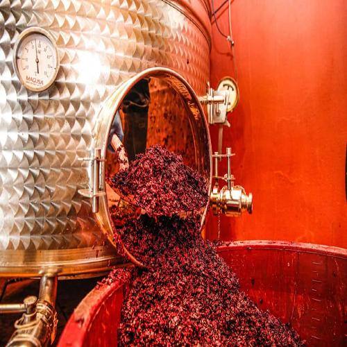 Vinproduktion hos Terra Dárt