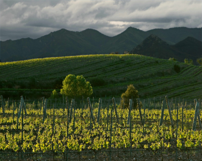 Vinmarker og de flotte område hos Mas Llunes